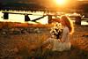 Secret Admirer (Sophia Alexis) Tags: alexis flowers sunset portrait girl self canon eos 50mm sigma 7d 365 sophia seasie