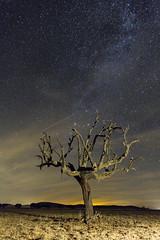 Aqu s!!! Perseida y... satlite!!! (Javier lamo Andrs) Tags: sky espaa tree nature night stars lluvia spain rboles europe interior badajoz andromeda 7d estrellas nocturnas extremadura
