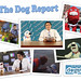The Dog Report photo montage