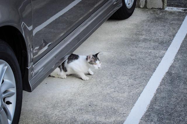 Today's Cat@2012-08-14