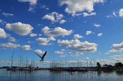 Marinabound (ryand1975) Tags: lake ontario canada water clouds burlington marina boats nikon seagull lakefront bfg d5100