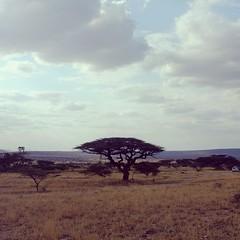 Samburu (saviorjosh) Tags: africa nature valencia square bush kenya safari squareformat samburu acacia savanah iphoneography instagramapp uploaded:by=instagram