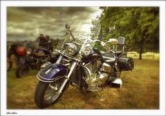 Harley (Steel Steve) Tags: harleydavidson motorcycle