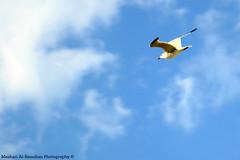 Liberty! (Meshari Al-Rezaihan) Tags: blue sky seagulls bird birds clouds canon meshari lens18200mm flayingbird canon550d alrezaihan