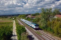 R 11779 @ Castelfiorentino (Wesley van Drongelen) Tags: fs ffss ferrovie dello stato trenitalia d445 d 445 r regionale castelfiorentino firenze florence siena train trein zug treno