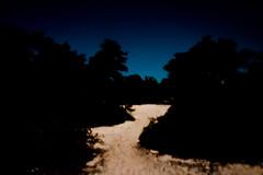 DSC00325 (Kaze of Tzertzelos) Tags: chrissi creta ierapetra moonlight ceder forest whitesand