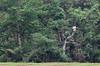 Randonnées 06 (Hervé Serrière) Tags: vietnam citéimpériale épéerestituée portrait halong baie marché circulation grotte phongnha viequotidienne temple pagode randonnée hanoï hochiminh hoian mausolée littérature ethnographie vinhlong market dongba binhtay bitexco cocly laocai dao sapa donghoi maichau namcang mékong hué sadec ngocson hoankiem déessemère quanthanh denmau thienhau vanmai tays topas jacquier marionnettes théâtre musée dragonbridge eiffel