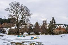 Bees Trees (NOL LUV DI) Tags: snow napier hawkesbay