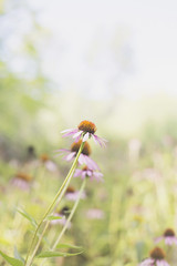 . (mAnd3rS1) Tags: nature beautiful lighting bokeh grass green flowers mud sun sunny happy tranquil soft focus