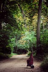 Le chariot (Soso Delacroix) Tags: chariot carro abandonner chemin parc abandonar camino trolley cart path toabandon park zonaverde parque