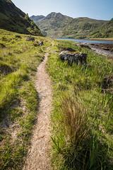 JHF0003754 (janhuesing.com) Tags: rot inverie scotland wildlife hiking highlands mallaig knoydart landscape nature outdoor