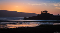 Where Oysters Grow (David Recht) Tags: tamales bay nicks cove sunset oysters reflection