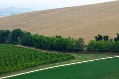 Scorcio marchigiano (luporosso) Tags: natura nature naturaleza naturalmente nikond300s nikon marche italia italy fermo scorcio scorci country countryside alberi trees