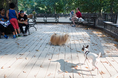 tompkins square dog run for small dogs (Charley Lhasa) Tags: ricohgrii grii 183mm 28mm35mmequivalent iso400 secatf28 0ev aperturepriority pattern noflash r009519 dng cropped taken160910163208 uploaded160913185629 2stars unflagged adobelightroomcc201561 lightroomcc201561 adobelightroom lightroom charley charleylhasa lhasaapso dog dogs tft tompkinssquaredogrun firstrun dogrun tompkinssquarepark nycparks eastvillage manhattan newyorkcity nyc newyork ny tumblr160913 httpstmblrcozpjiby2c3bzr1