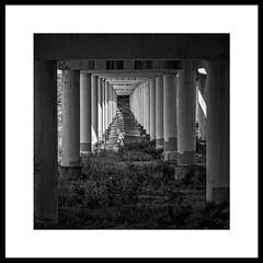 Lurking (brev99) Tags: sigma70mm28macro d7100 bridge arkansasriver tulsa columns architecture shrubs weeds topazdetail topazdenoise perfecteffects10 ononesoftware silverefex border blackandwhite