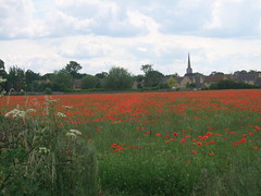 Poppy Field 18 (j a thorpe) Tags: flowers red northamptonshire poppy poppyfield oundle