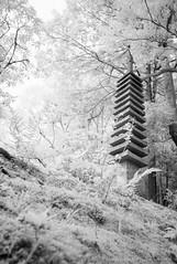 Isuien Garden, Nara, Japan (jev) Tags: leica blue white japan japanesegarden spectrum wide surreal rangefinder super infrared manual nara infra digitalinfrared dominantcolor dominantcolour isuiengarden avenon leicam8 meijiera  walkinggarden leicaimages wwwartqcom