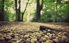 Path through the forest (Electra_star) Tags: trees green woodland woods bokeh path stones ground pebbles