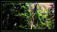 THAILAND, Phuket,  Khao Phra Thaeo-Nationalpark , im Dschungel , 82 (roba66) Tags: travel thailand nationalpark asia asien urlaub insel explore thai phuket isle thailandia isola eastasia thailandphuket phuketisland earthasia roba66 khaophrathaeonationalpark