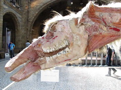 Animal Inside Out camel head at Natural History Museum (maineexile) Tags: london naturalhistorymuseumlondon