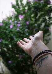 au compte-gouttes (le regard ailleurs) Tags: pink flowers selfportrait blur tree green me nature water rain rose tattoo fleurs myself word drops eau hand purple autoportrait sink skin main fingers violet pluie bodylanguage moi vert oxygen bracelets wrist bodypart arbre 1month myhand flou peau mot doigts tatouage gouttes pieceofme poignet partofme oxygène dropper couler 1mois i partieducorps mamain onephotoaday unboutdemoi feelthenature 1photoparjour leregardailleurs aucomptegouttes souslesgouttes ressentirlanature underthedrops