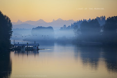 light of the morning. (kvdl) Tags: summer mist fog landscape geese britishcolumbia august fraserriver fortlangley canadageese morningmist morningfog riverscape bedfordchannel kvdl canonef70200mmf28lisiiusm