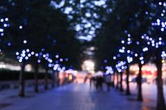 London's lights. 51/365 (Sarah Messina) Tags: city uk greatbritain blue trees england london alberi lights squirrel squirrels blu londoneye bigben stjamespark luci londra granbretagna scrat inghilterra scoiattolo parlamento scoiattoli ruotapanoramica houseofparlament