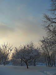 Winter Blues (AleksandraMicic) Tags: 7dwf flickr sky outdoor landscape photography photo photos foto image images slika slike pejzaz drvece trees winter snow scenery serenity serene peaceful inspiration dusk