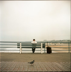 (AAGCTT) Tags: california man bird 6x6 film beach mediumformat losangeles santamonica agfacolorportrait160