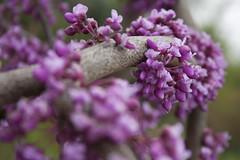 blooms (Remnant Still) Tags: flowers gardens spring kentucky ky louisville whitehall stmatthews