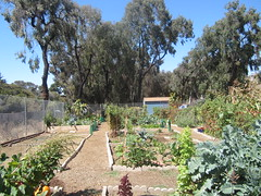 Westminster Community Garden (Anna Sunny Day) Tags: garden sandiego communitygarden pointloma westminstercommunitygarden