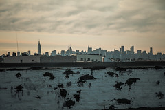(onesevenone) Tags: city nyc newyorkcity urban ny newyork rooftop skyline brooklyn america view unitedstates manhattan gothamist bushwick eastcoast bedfordstuyvesant stefangeorgi onesevenone