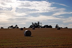 Round Hay Bales (DaveJC90) Tags: blue light shadow summer sky cloud sun sunlight colour detail tree field dark landscape evening suffolk colours afternoon view bright path background straw sunny line sharp round hay bales bale footpath sharpness