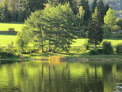Tree-Reflections (Habub3) Tags: travel sea lake holiday tree green nature water canon reflections germany landscape deutschland reisen wasser europa europe stuttgart urlaub natur atmosphere powershot glowing tones landschaft baum vacanze 2012 g12 spiegelungen refexionen habub3 flickrhivemindgroup