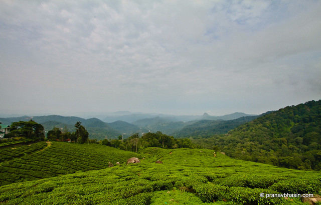 Tea Gardens At Munnar, Kerala