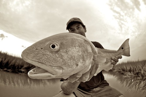 south carolina redfish B&W