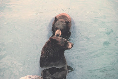 Sniff Sniff (Felicia | Brimacombe) Tags: life bear park lighting travel light summer sunlight lake ontario canada black color cute love film nature water beautiful animal animals landscape outdoors landscapes emotion candid clear effect animalplanet instagramapp