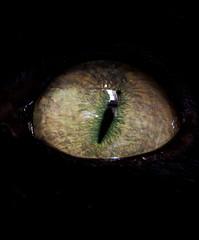 Hypnotizing Eye (CoolMcFlash) Tags: iris pet black detail macro reflection eye look animal closeup cat canon photography eos scary fotografie open katze nah makro tamron reflexion auge blick haustier schwarz pupil 250 nahaufnahme tier reflektion retina cateye cornea dcr pupille unheimlich schauen dcr250 raynox offen fav10 katzenauge makroaufnahmen 18270 60d hornhaut b008 wildlifewednesday