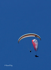 Paragliders ~Mark Denzel and Brad MacMonagle in Thermal~ (Ron1535) Tags: golden colorado wing sail roll pitch paragliding soaring glider lookoutmountain thermals mtzion yaw freeflight freeflyer flexiblewing glideraircraft soaringaircraft ramairdesign