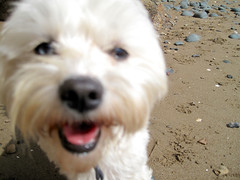 Poppy! (russelljsmith) Tags: winter newzealand dog sun beach sunshine closeup coast sand poppy sundaydrive firthofthames 77285mm waitibay