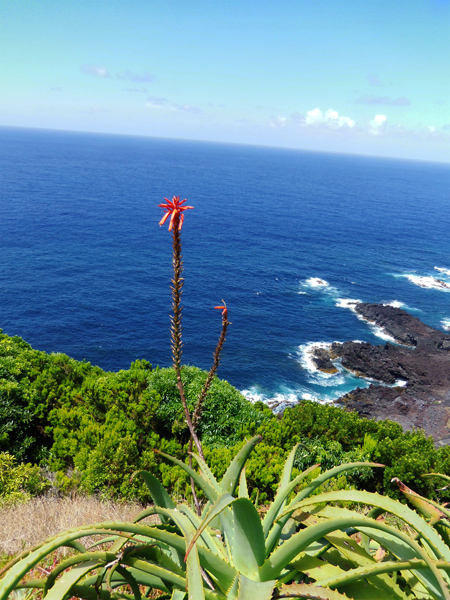 AZORES ISLAND. Ponta Delgada
