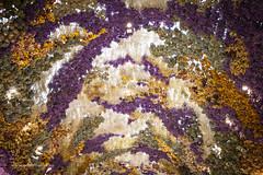 Beauty Garden (Adam Dimech) Tags: flowers flower driedflowers floral art decoration ceiling building interior shoppingcentre shoppingmall shoppingcenter eastland eastlandshoppingcentre ringwood melbourne victoria australia