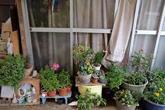 (*suika *) Tags: nikko okorogawa rural gardening oldhouse
