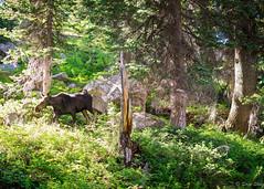 2016Upperpaintbrush13s-88 (skiserge1) Tags: park camping lake mountains america freedom hiking grand jackson national backpacking wyoming teton tetons