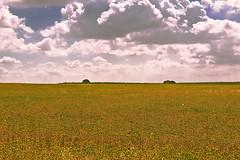 El campo 03  -  The field 03 (ricardocarmonafdez) Tags: sevilla bollullosdelamitacin campo field country rural paisaje landscape cielo sky nubes clouds color luz light minimalismo canon