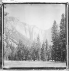 In the shadow of El Capitan - Yosemite 2016 (Andrew Bartram (WarboysSnapper)) Tags: yosemite nationalparks usa california elcapitan sx70 monochrome mountains trees border polaroid landcamera instant snapitseeit emulsivefilm believeinfilm