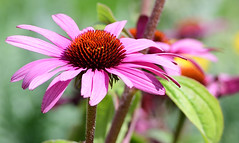 People from a .... (Steven H Scott) Tags: flower close up plant nature outdoor organic patten petal
