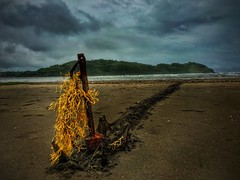 Recovered anchor.  #beach #morjim #anchor #dragged #yellow #clouds #sea #sand #goa #india #iphone6s #shotoniphone #shotonaiphone (karan667) Tags: beach morjim anchor dragged yellow clouds sea sand goa india iphone6s shotoniphone shotonaiphone