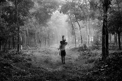 God's own country (Madhusudanan Parthasarathy) Tags: pathanamthitta kerala india incredibleindia keralam woods logs green mono blackandwhite man human worklife westcoast nikon d750 madhusudananparthasarathy