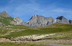 dans le col de Restefond (4) (b.four) Tags: montagna montagne mountain mouton sheep pecora restefond bonnetcarr hautetine alpesmaritimes